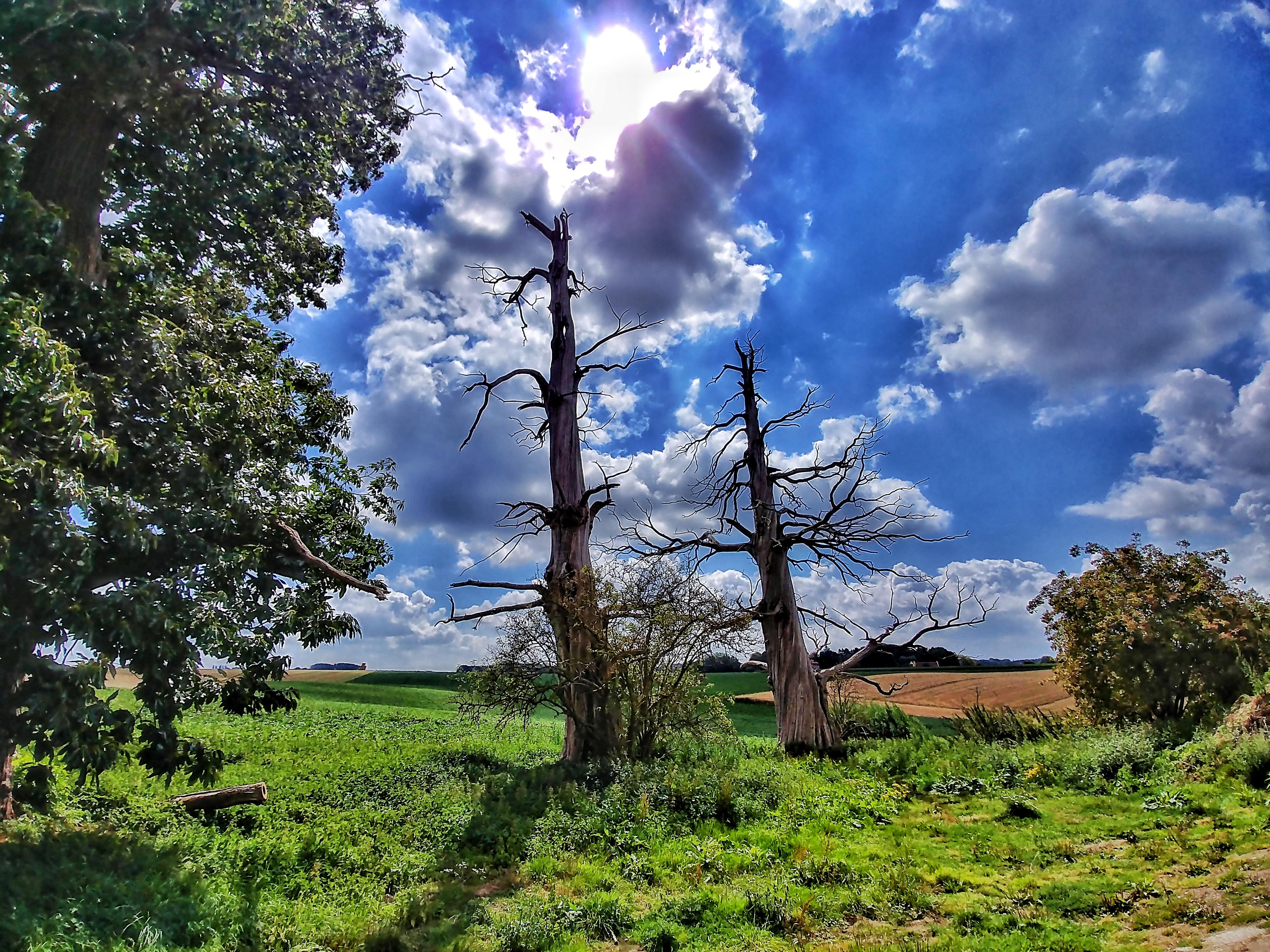 Waterloo - Chestnut Trees - Hougoumont Farm